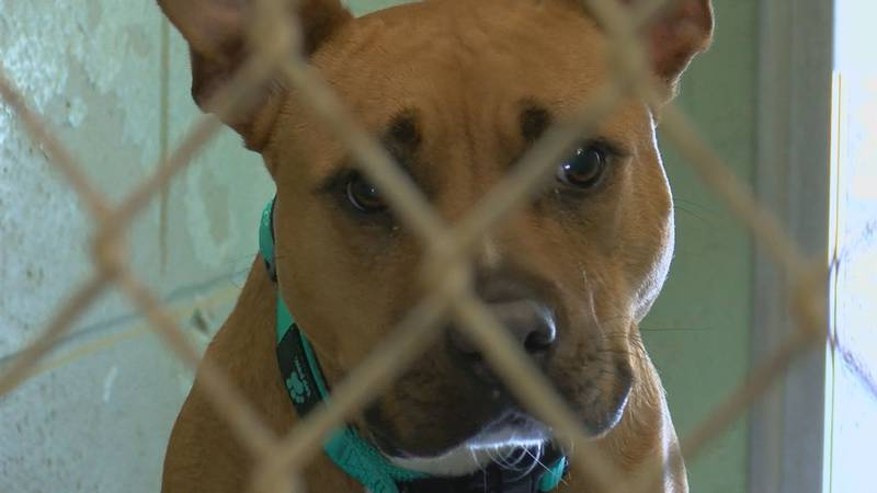 The Horry County Animal Care Center has more than 200 cats and dogs available for adoption.
