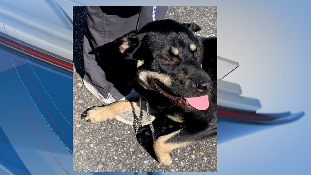 A Pee Dee animal shelter is asking for donations from the public after an abused dog was...