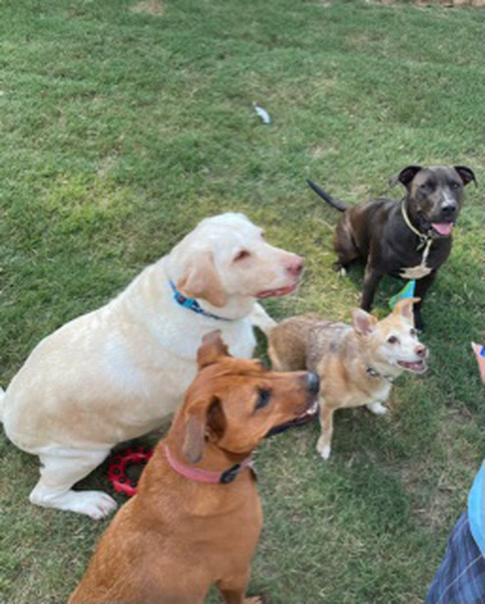 Rutabaga gets a picture taken with her three new brothers and sisters.