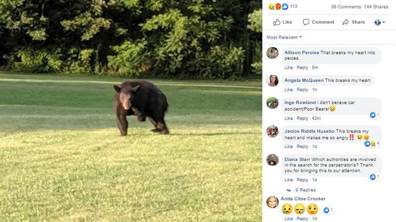 Bears with missing limbs have been spotted in western North Carolina - and they're worrying...