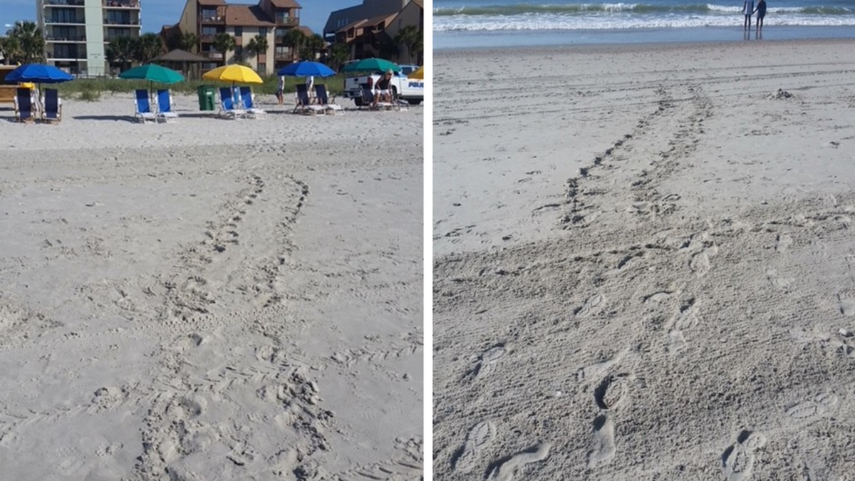 The city of Myrtle Beach is asking the public not to disturb sea turtles as nesting season gets...