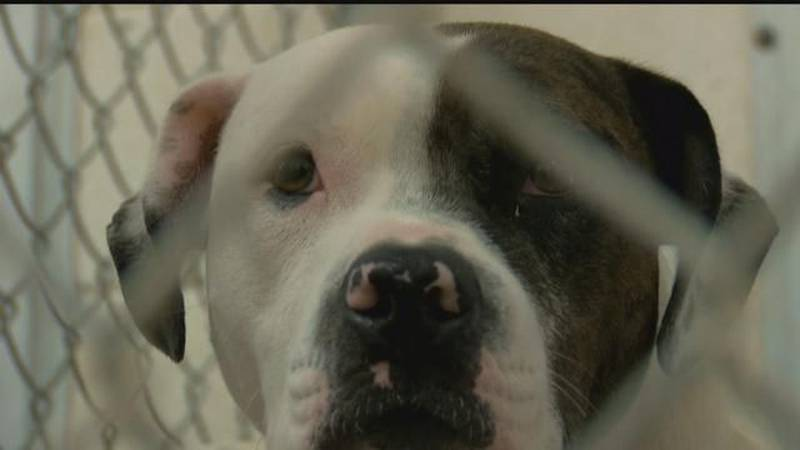 Grand Strand Humane Society will temporarily locate to a facility near the Tanger Outlets on...