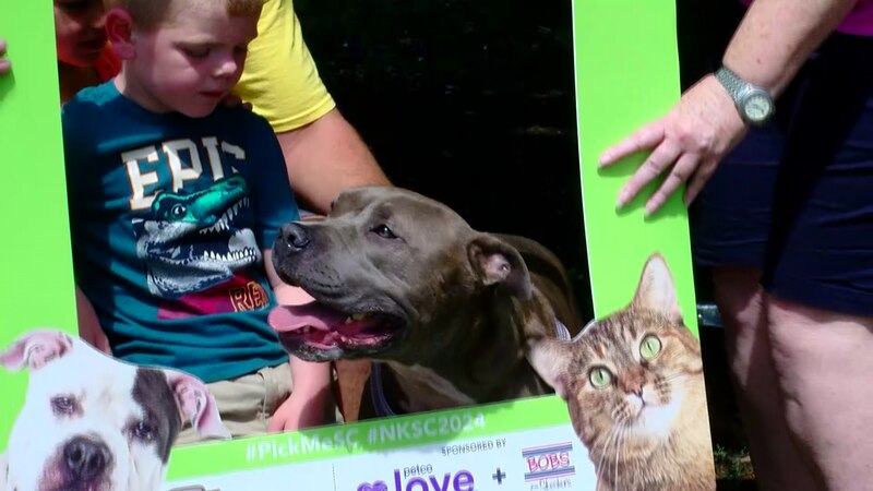 """""""Butterball"""" the Pitbull found a new home as part of the Grand Strand Humane Society's adoption..."""