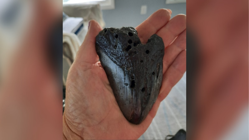 One woman discovered a massive megalodon tooth in a swash in North Myrtle Beach.