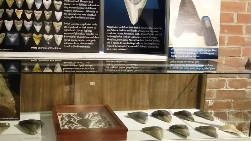 The megalodon exhibit can be seen at the South Carolina Maritime Museum in Georgetown.