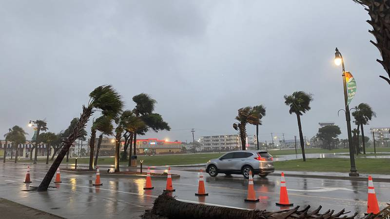 Crews were called to remove palm trees from Ocean Boulevard that were toppled by winds from...