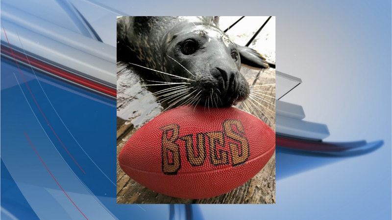Gambit the seal was among animals making their last-minute picks on Friday.