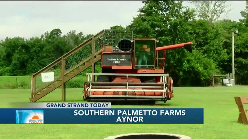 Southern Palmetto Farms Overview