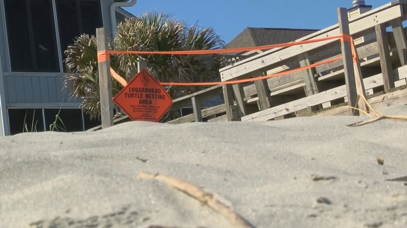 Volunteers with South Carolina's Department of Natural resources have already started making...