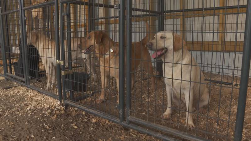 Volunteers with Fostering Foster Animal Rescue in Kershaw County said the pups are doing a lot...
