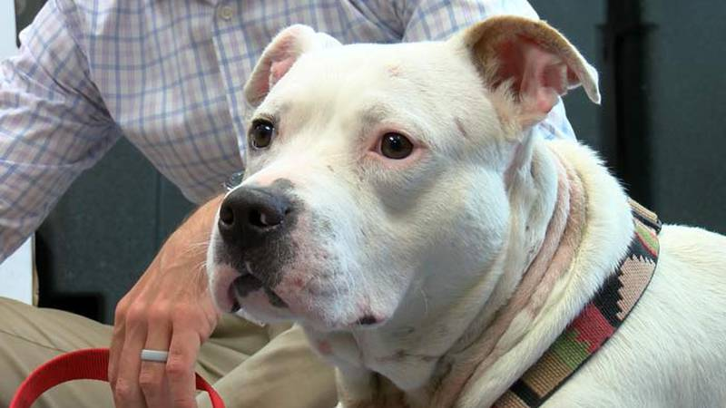 The Charleston Animal Society is offering a $1,000 reward for information that leads to the...