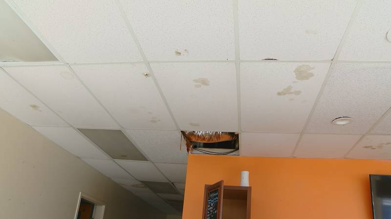 The ceiling tiles in the office at the Humane Society are stained from decomposing rats.